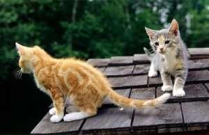 新猫怎么和老猫和平相处